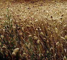 Feel The Wind In The Field by Anne  McGinn