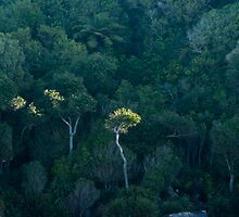 Abel Tasman National Park by Werner Padarin