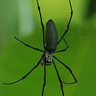 caught in a web by steveault