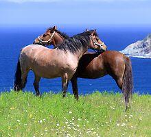 Seahorses by Brian Carey