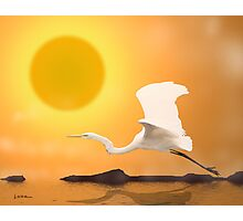Egret Flying Into Sun Photographic Print