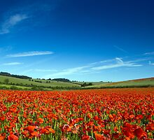 Land of Poppies 2 by Diado