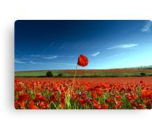 Land of Poppies 3 Canvas Print