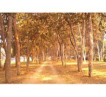 A Golden Walk... Photographic Print