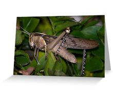 Red Locust Greeting Card