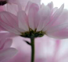 Pink Tulle by Renee Hubbard Fine Art Photography
