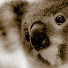 Baby Koala by Donna Rondeau