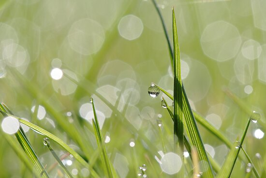 Morning Dew by Donna-R