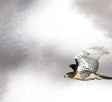 Flight Of The Hawk by CarolM