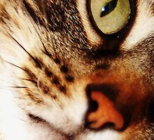 Cats Eye by Plain