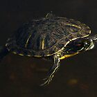 turtle in repose by David Chesluk