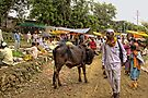 A small village market at the foothills of shayadri mountains by Tridib Ghosh