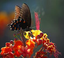 Butterfly Sunset by rrushton