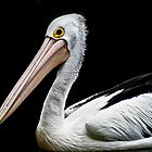 Pelican II by Donna Rondeau