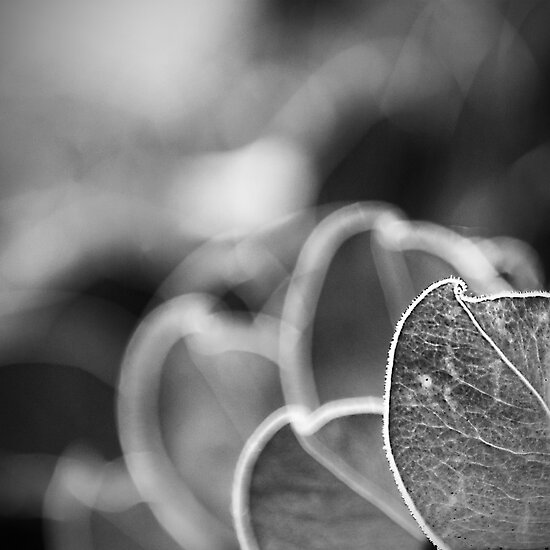 Leaves in shades of grey by johnwheat