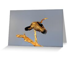 """ Darter "" Greeting Card"