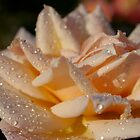 Rose Water by EileenFrith