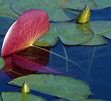 Under the Lily Pad by Kathy Weaver