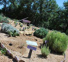 Lavender Varietal Garden by Cathy Jones