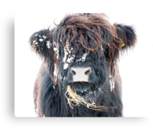 Highland Cow in Snow Canvas Print