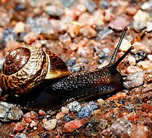 Sliding snail by Arve Bettum