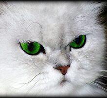 Green Eyed Lady by Jenni Atkins-Stair