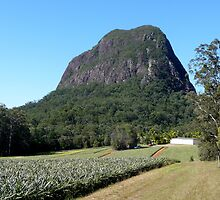 Glasshouse Mountains by Carol Walker