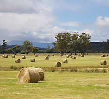 Bales Of Hay by Cherie Carlson