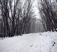Winter's path by Pirostitch
