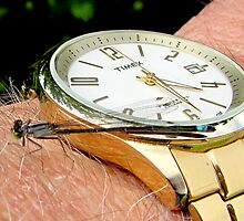 Timex Damsel  by Chuck Gardner