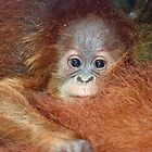 Baby Orangutan by Rebecca Conroy