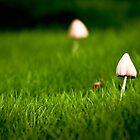 Mushroom Village by damienlee