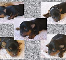 Tara & Toby's Pups by jackitec