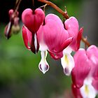 Bleeding Hearts by DJ Fortune