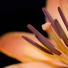 Up Close With An Asiatic Lily by Darryl Leach