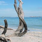 Serenity Sannibel Island by DIANE KLEVECKA