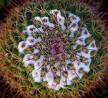 Cactus Radiance by Vicki Pelham