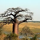 Baobab over Chobe  by Graeme  Hyde