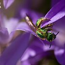 Green Bee by HelenaBrophy