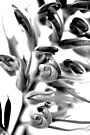 Mono Grevillea by Renee Hubbard Fine Art Photography