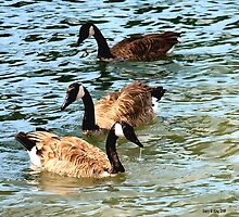 3 geese by Barry W  King