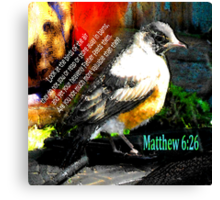 Matthew 6:26 Robin Canvas Print
