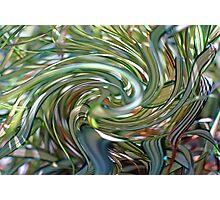 Ornamental Ribbon Grass Abstract 2  Photographic Print