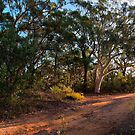 Bungoona Path by Rod Kashubin