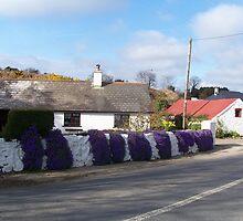 White-Wash & Wallflowers by Pat Duggan
