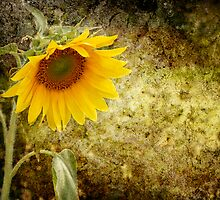 Sunflower by Sheryl Kasper