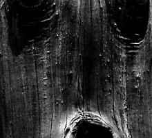 Natures Sculpture by Noel Elliot