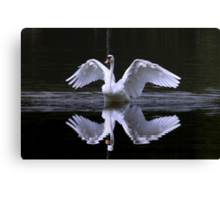 Swan and Reflection Canvas Print