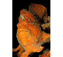 Orange Giant Frogfish Photographic Print