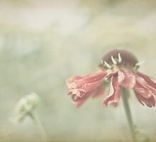 Blooming by Sophie Goldsworthy